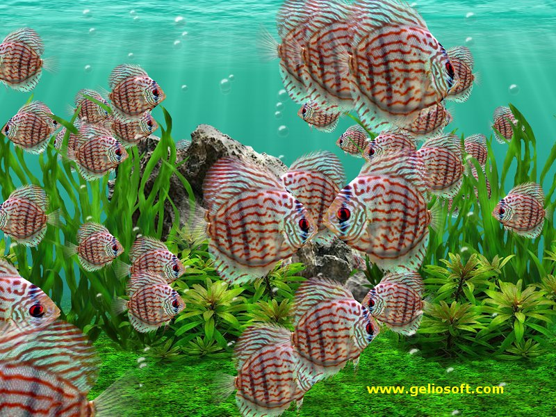 Pictures 3D Fish Wallpaper