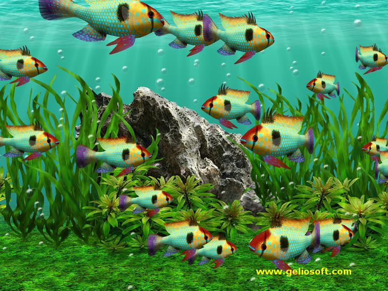 Tropical fish school wallpaper wallpaper wide hd for Moving fish wallpaper