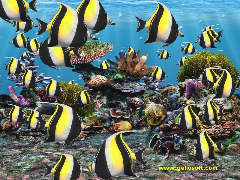 Download Moorish Idol Fish Screen Saver and Wallpaper