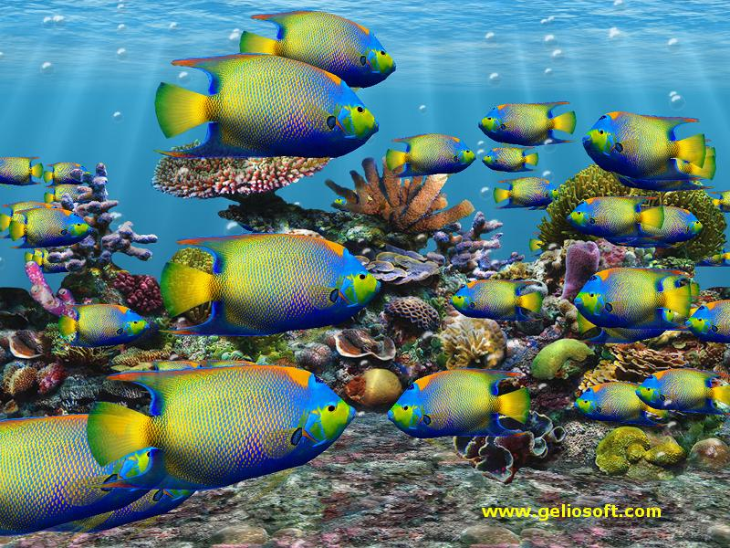 Moving queen angelfish screensaver and free wallpaper for Moving fish screensaver