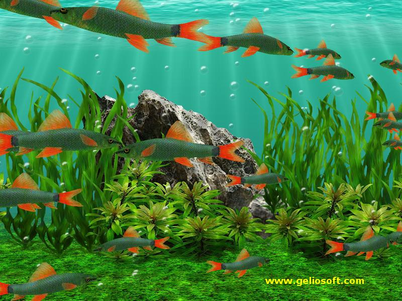 moving rainbow shark fish screensaver and free wallpaper
