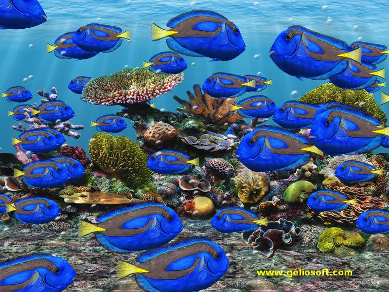 Moving regal tang fish screensaver and free wallpaper for Moving fish screensaver