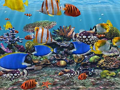 Enjoy saltwater and freshwater 3D Aquariums.