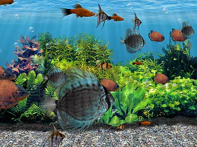 Up to 100 Tropical Fish can swim in the Virtual Aquarium at the same