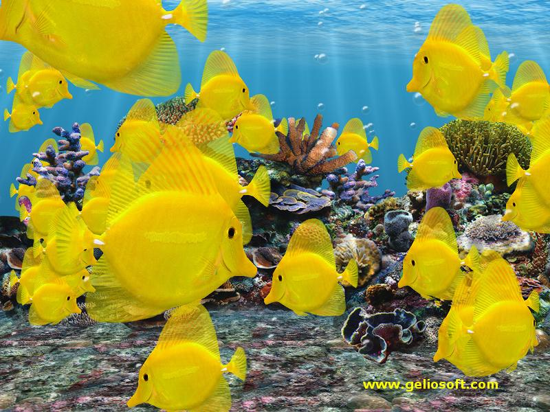 Moving fish tank screensaver with 3d yellow tang fish for Moving fish screensaver