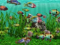3D fish aquarium screensaver DVD