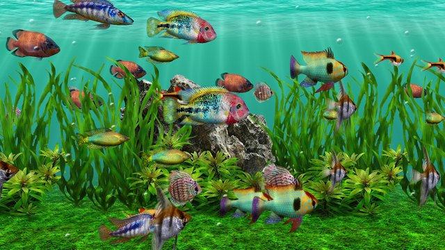 3d aquarium dvd screensaver download for Fish tank video