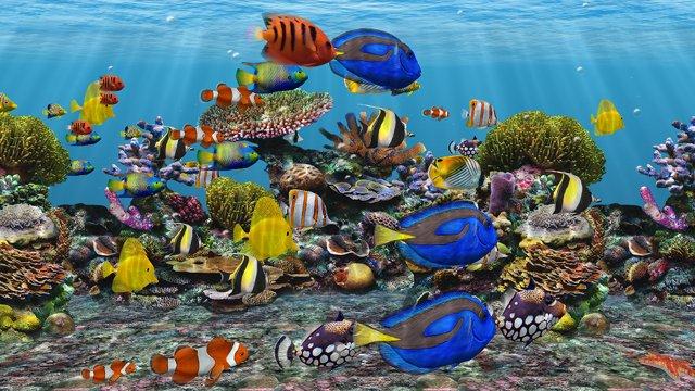 3d tv in fish - photo #15